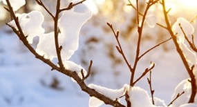 Avene hiver