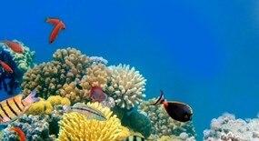 Chraňte moře a oceány s kvalitními přípravky Sluneční ochrany!
