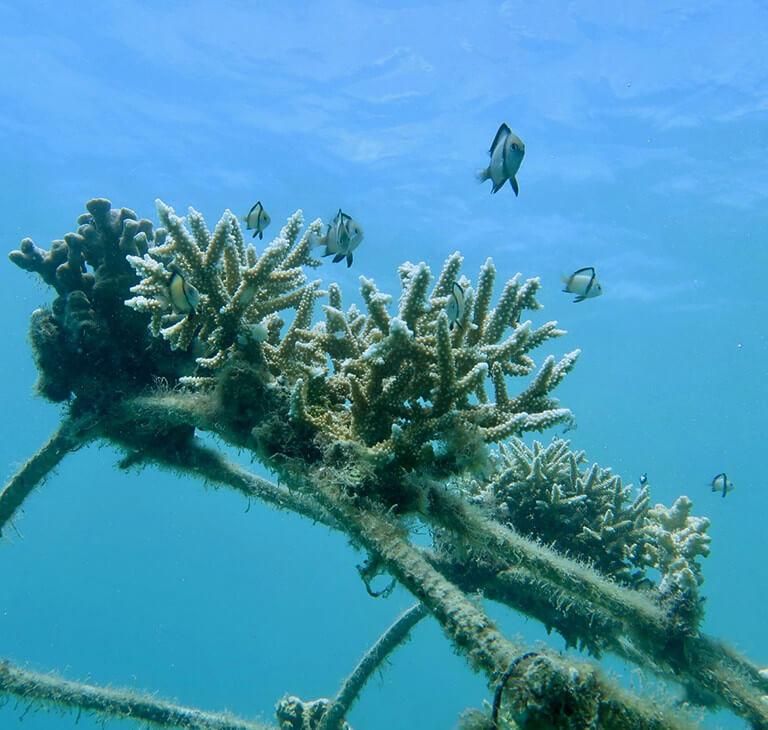 Ein zweites Leben für den Meeresgrund   Eau Thermale Avène