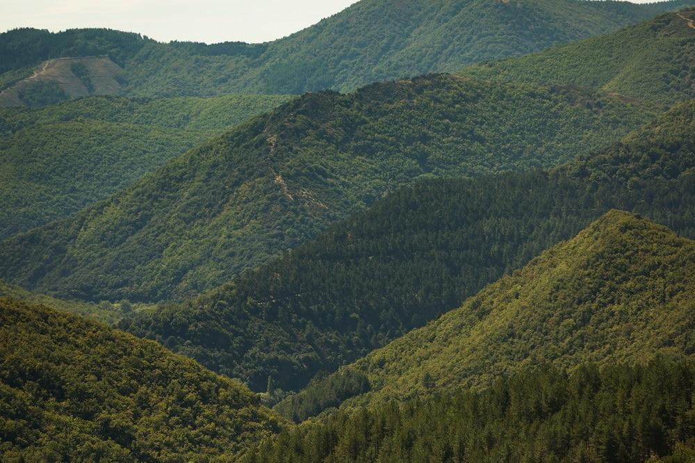 Bosque Avène