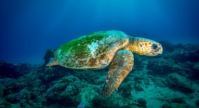 Join Eau Thermale Avène & Save The Turtles This Summer